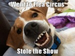 Went To Flea Circus