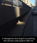 This Cat Has A Side Quest To Offer Me