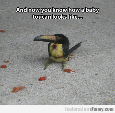 And Now You Know How A Baby Toucan Looks Like