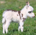 Baby Donkeys Deserve More Attention