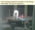 I Sent My Dog Outside For Standing On The Dining..