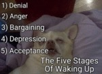 The Five Stages Of Waking Up