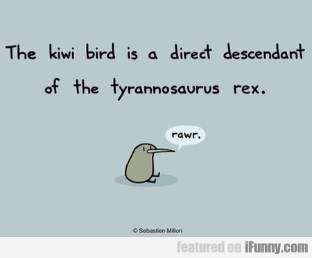 The Kiwi Bird Is A Direct Descendant Of The T-rex  iFunny.com