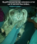 My Girlfriend Put Her Hair Extensions On Her Cat