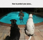 How To Protect Your Pizza...