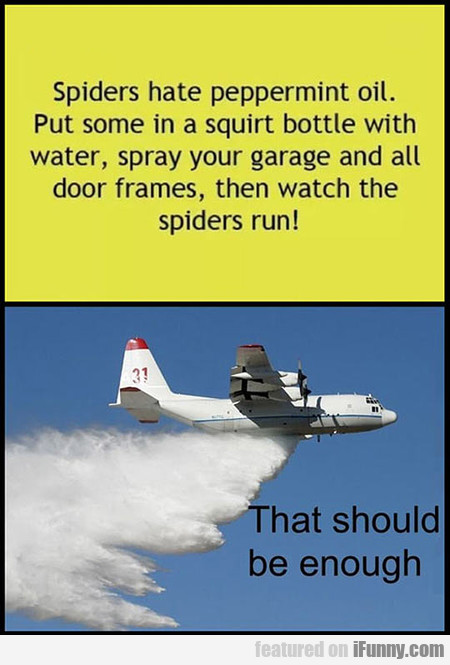 Spiders Hate Peppermint Oil. Put Some...