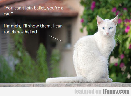 you can't join ballet, you're a cat