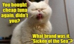 You Bought Cheap Tuna Again?