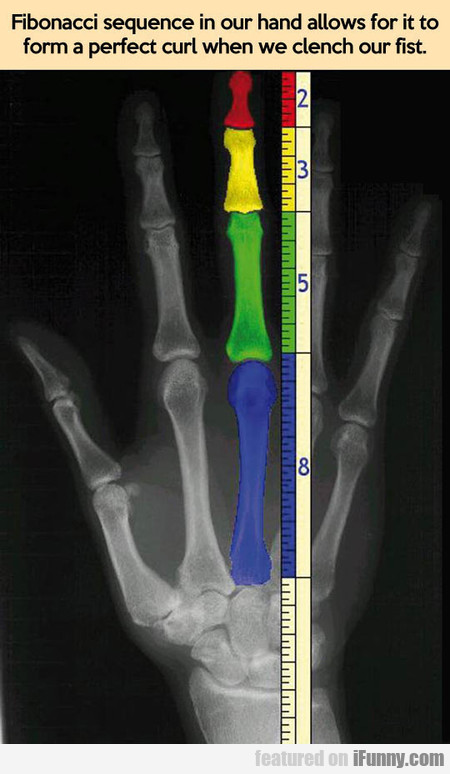 Fibonacci Sequence In Our Hand