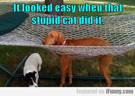 It looked easy when that stupid cat did it