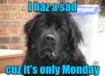 I Haz A Said Cuz It's Only Monday