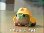 I Has A Hat. A Yellow Hat.