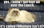 Yes, I Know I Got Hair All Over The Couch