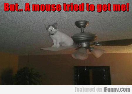 But.. A Mouse Tried To Get Me!