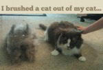 I Brushed A Cat Out Of My Cat
