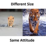 Different Size, Same Attitude