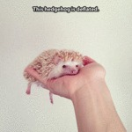 This Hedgehog Is Deflated