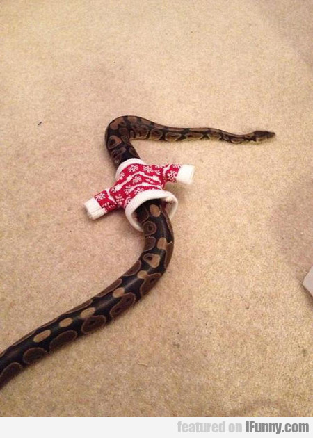 Tiny Sweater For A Snake
