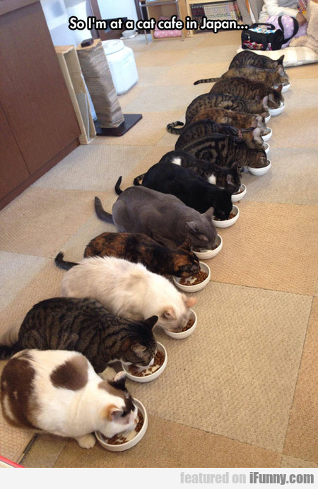 at a cat cafe in japan