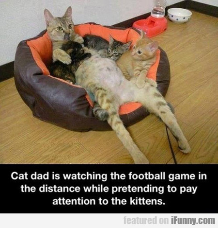 Cat Dad Is Watching The Football Game In The...