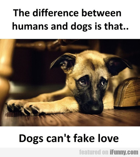 The Difference Between Humans And Dogs Is That...