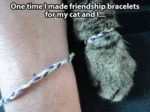 One Time I Made Friendship Bracelets For My Cat...