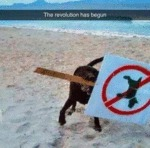 Dogs Revolution Has Begun