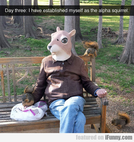 I Have Established Myself As The Alpha Squirrel