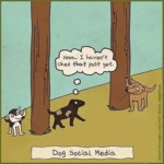 Dog Social Media Explained
