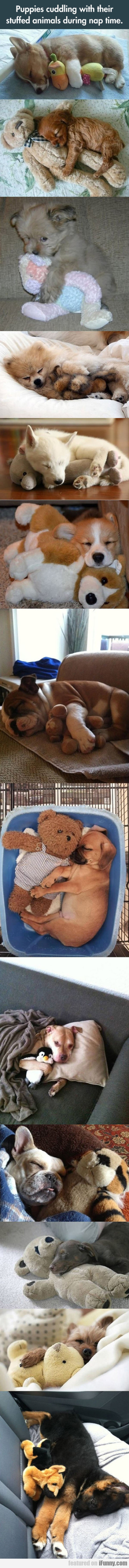 Puppies Cuddling With Their Stuffed Animals During