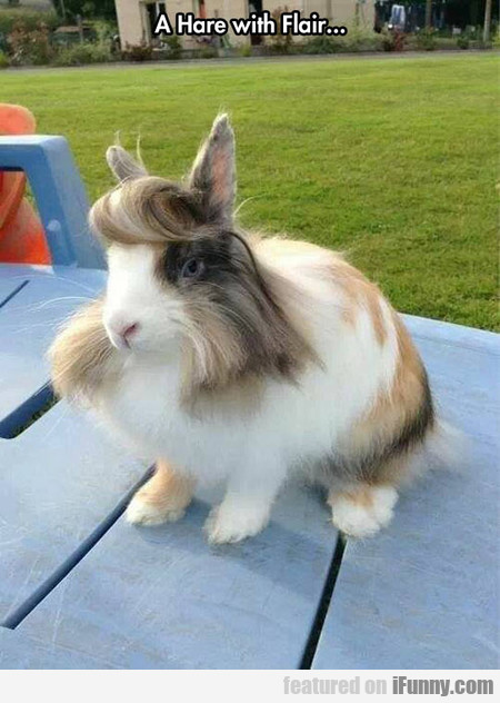 A Hare With Flair...
