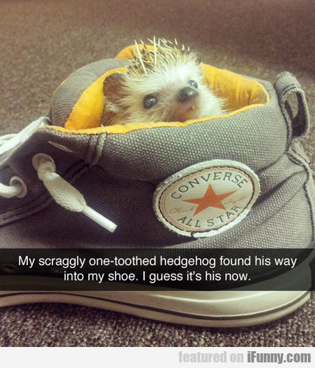My Scraggly One-toothed Hedgehog Found His Way
