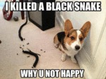 I Killed A Black Snake. Why U Not Happy?