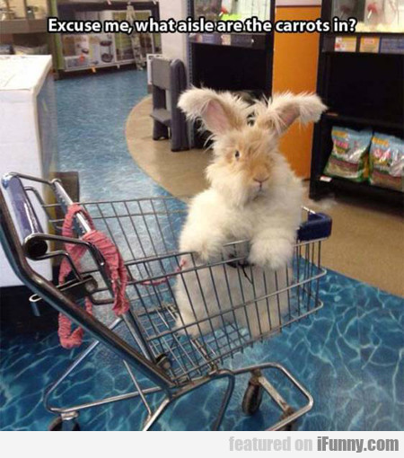 Excuse Me, What Aisle Are The Carrots In?