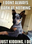 I Don't Always Bark At Nothing