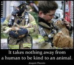 It Takes Nothing Away From A Human To Be Kind
