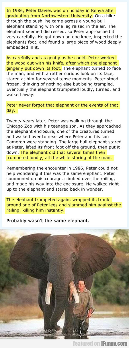 In 1986, Peter Davies was on holiday in Kenya