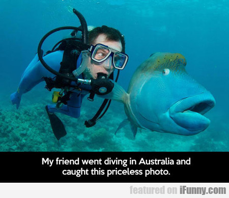 My Friend Went Diving In Australia