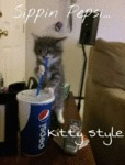 Sippin Pepsi... Kitty Style...