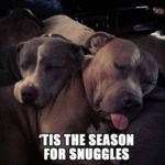 Tis The Season For Snuggles