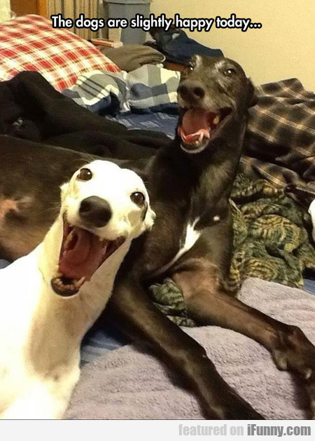 the dogs are quite happy today