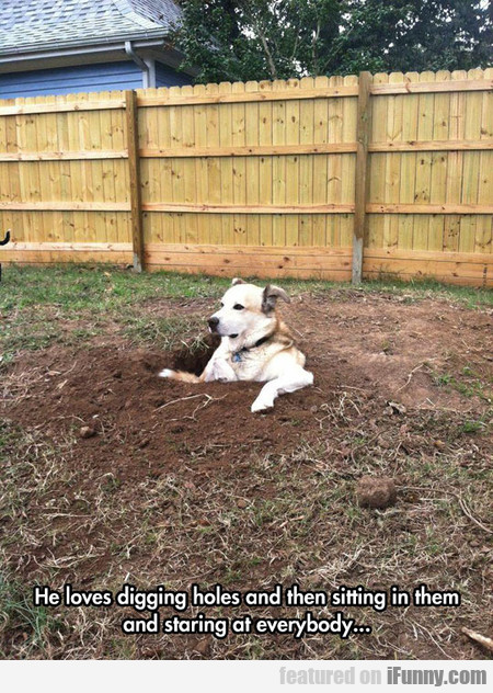 He Loves Digging Holes And Then Sitting In Them
