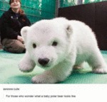 For Those Who Wonder What A Baby Polar Bear Looks