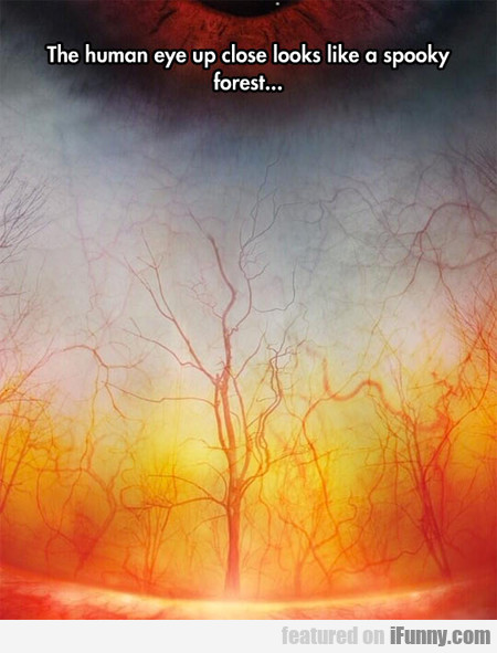 The Human Eye Up Close Looks Like A Spooky Forest