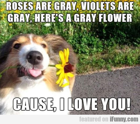 Roses Are Gray, Violets Are Gray...