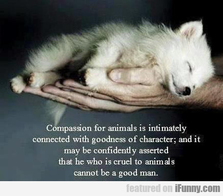 Compassion for animals is intimately connected...