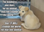 The Kindness One Does For An Animal May Not Change