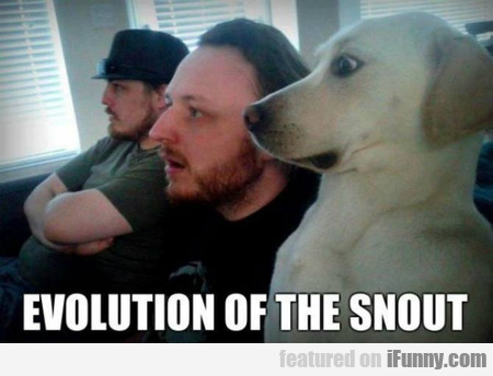 evolution of the snout