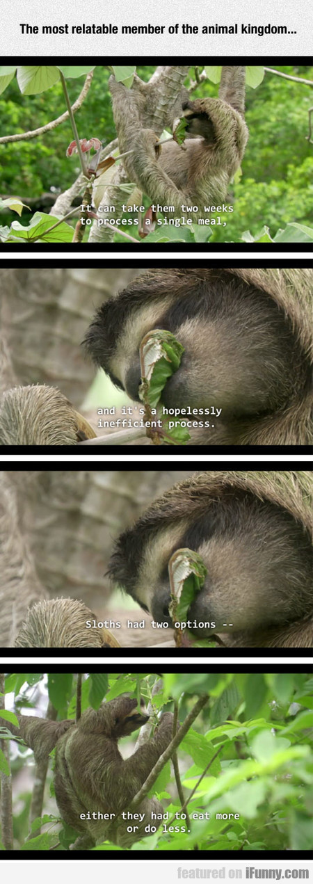 The Most Relatable Member Of The Animal Kingdom...