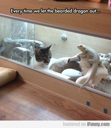 every time we let the bearded dragon outside